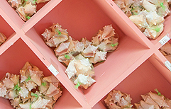 Conchs Shells and Corals